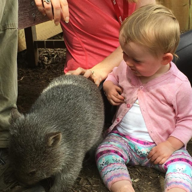 Very happy baby Sofia playing with baby wombat Willow athellip